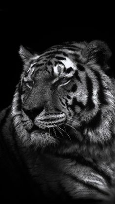 Don T Tread On Me Iphone 6 Wallpaper 1000 Images About Phone Wallpapers On Pinterest Tigers