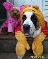 1000+ images about Disney Pets on Pinterest | Dog ...