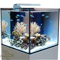 specifically designed for the system mini $ 999 99 # nano # aquarium