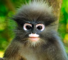 Cute Monkey Wallpapers For Mobile 1000 Images About Funny Monkey On Pinterest Funny