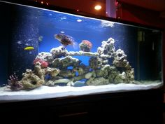 Our 220g salt water fish tank. Two months set up. (3rd tank) More