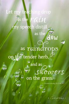 Raindrops Falling On Flowers Wallpaper Dazzling Drippy Dewy Droplets On Pinterest Dew Drops