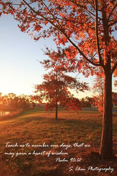 Free Fall Scripture Wallpaper 1000 Images About Autumn Bible Verses On Pinterest