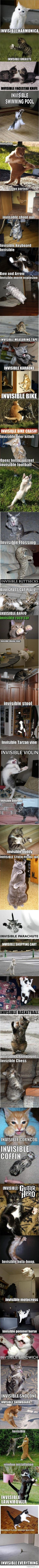 Lolcats Invisible Olympics