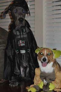 The Avengers Loki Dog Costume | Blame, Halloween costumes ...