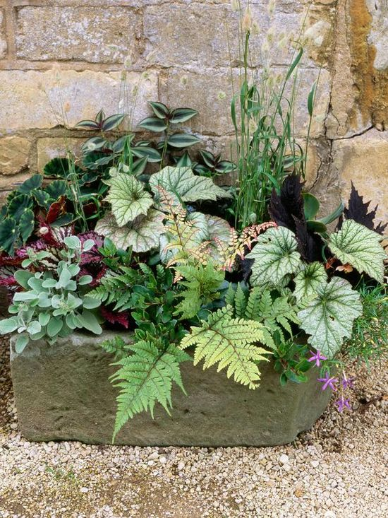Stephanie @ Garden Therapy (Garden_Therapy) On Pinterest