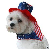 Patriotic Bandana & Hat Dog Costume   Pets in clothes ...