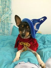 Sorcerer Mickey costume for dog