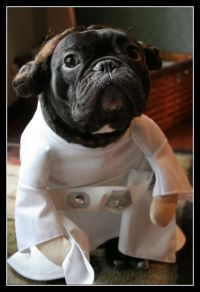 Dog costumes, Halloween and Princess leia on Pinterest