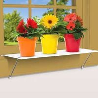 Window plants, Plant shelves and Plants on Pinterest