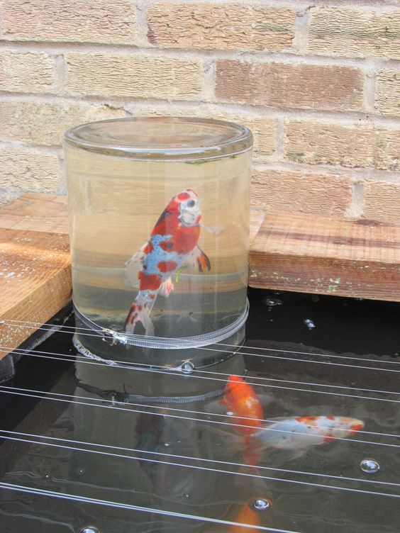 Cash Pool Portugal My Diy Fish Observation Tower / Observatory Made From A