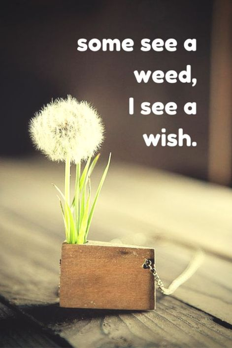 some see a weed,I see a wish. Click on this image to see the biggest selection of life tips and positive quotes!: