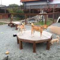 Dog Play Area - it's funny how much dogs love something as ...