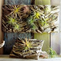 Driftwood Wall Garden. Like a breath of fresh air. Our ...