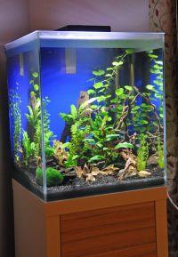 F35, Fresh and Aquarium on Pinterest