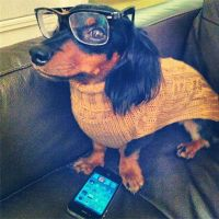 Hipster, Dachshund halloween costumes and Dachshund on ...