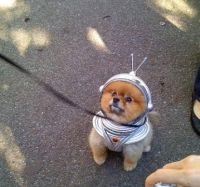 Dog in astronaut space costume with cute antenna helmet ...