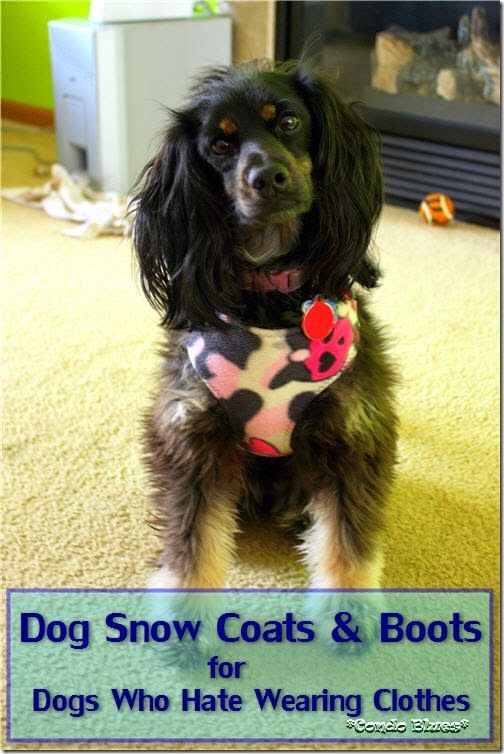 Dog Coats And Boots For Dogs Who Hate Wearing Clothes