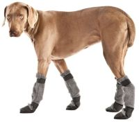 Winter coats, Whippets and Great danes on Pinterest