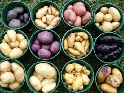 Grow Potatoes In A Barrel Or Trash Can | Gardening Ideas To Make