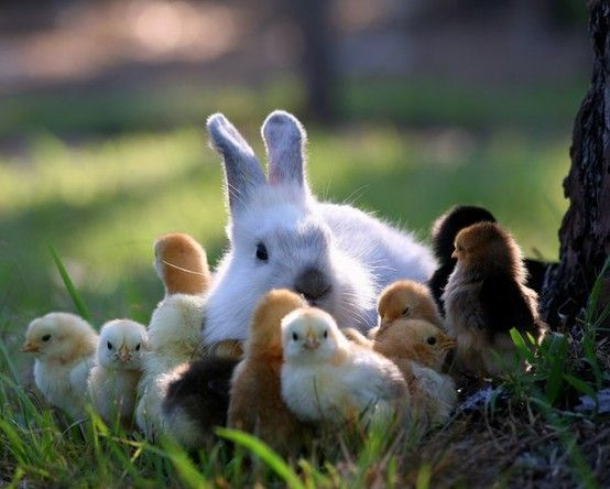 Raindrops Falling On Flowers Wallpaper Springtime Bunnies And Chicks Things That Make Me Happy