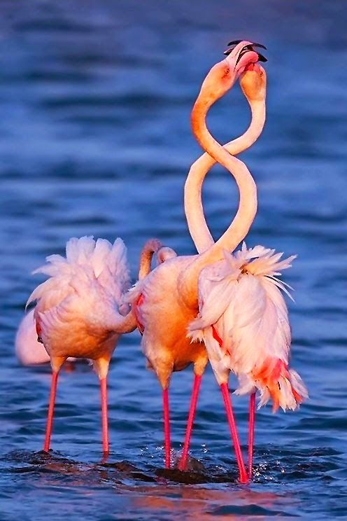 Cute Wallpapers Of Pineapples Flamingos Cute Animal Photos And Animals Photos On Pinterest