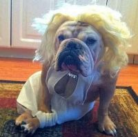 32 Dogs With Better Costumes Than You | Sexy, Facebook and ...