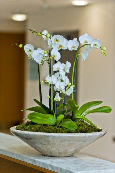 Large Ceramic Orchid Deskbowl For Reception Desk Maidenhead | Deco