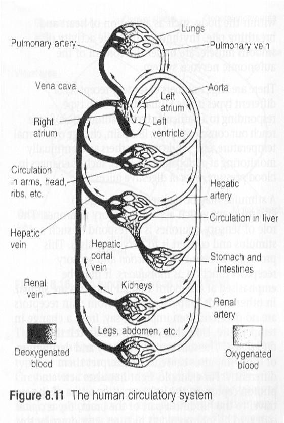electrical parts of the heart