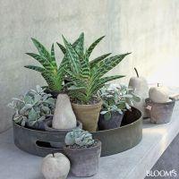 Wohndeko: Grau-grne Zimmerpflanzen beleben Interieur ...