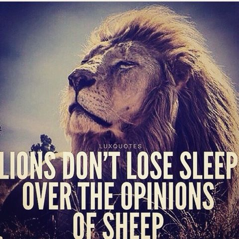 Spiritual Gangster Quotes Wallpaper Image Lions Don T Lose Sleep Over The Opinions Of Sheep