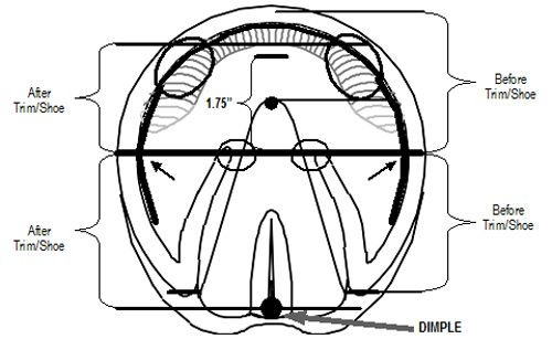 trimming horse hooves diagram