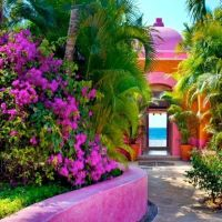 Mexican garden, Mexican patio and Mexicans on Pinterest