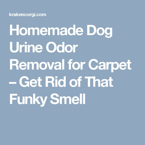 Homemade Dog Urine Odor Removal For Carpet Get Rid Of