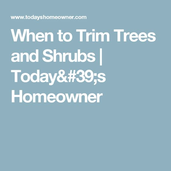 When To Trim Trees And Shrubs | Today'S Homeowner | Tree Pruning