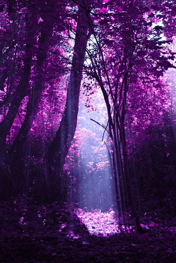 35 Fascinating Photos of Nature - Purple Forest, China:
