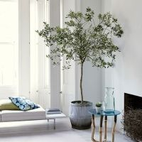 White living room with olive tree | Gardens, Plants and ...