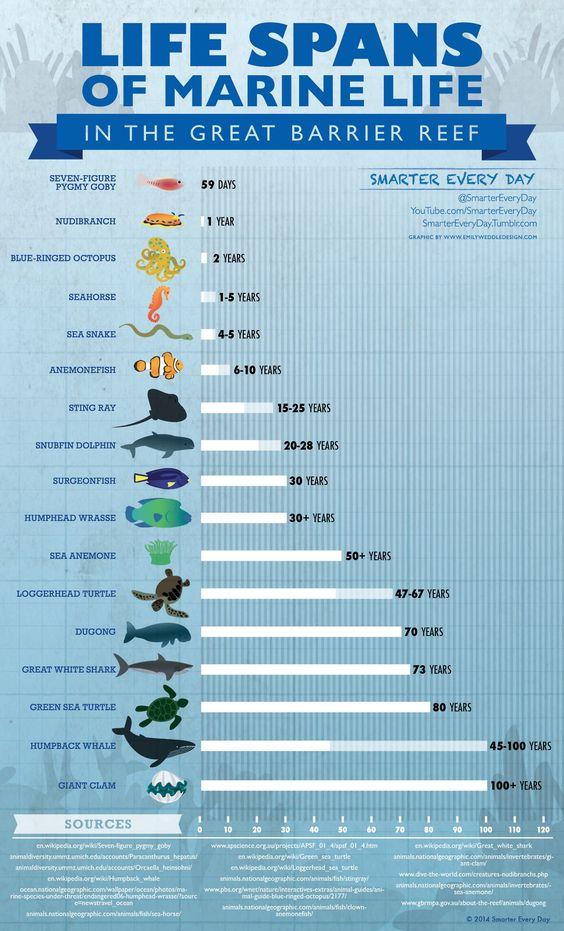 Life Spans of Marine Life chart