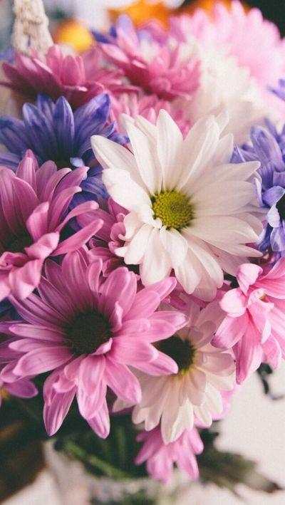 Wallpaper iPhone flowers ⚪️ | Papéis De Parede | Pinterest | Flower, iPhone and Wallpapers