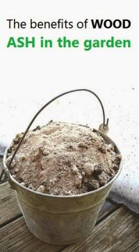 Alternative Gardning: The benefits of WOOD ASH in the ...