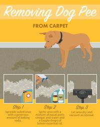 Best Stain Removal Tricks For Your Clothes, Furniture, and ...