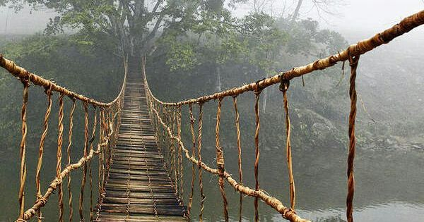 Ikea Indiana Amazing Old Rope Bridge In The Jungle Forest Natural