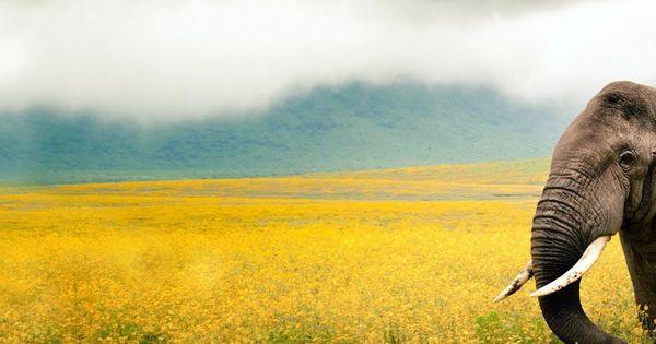 Field Wallpaper Hd 3840x1200 Wallpaper Elephant Grass Field Walk Sky