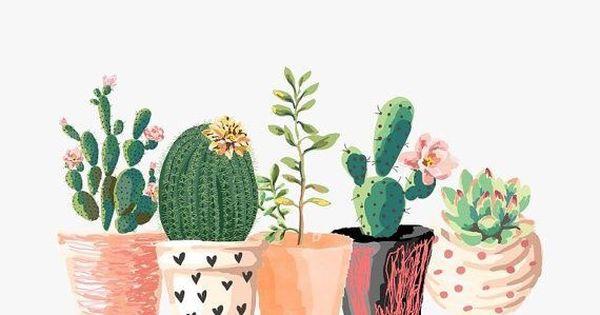 Cute Watercolor Wallpaper Osita Mimi Bella Ilustraci 243 N De Cactus Random