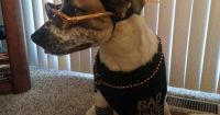 Cool Pet Dog Costume: Sully the Pupster of Halloween ...