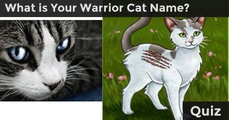 Warrior Cats Wallpaper With Quotes Discover Your Warrior Cat Name What Clan You Belong To