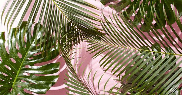 Minimalist Fall Wallpapers West Elm Tropical Leaves Desktop Wallpaper Jpg 4800 215 2700