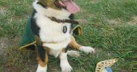 Loki dog | The Avengers Cosplay | Pinterest | Boyfriend ...