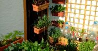 This tiny vegetable garden only uses 3 square yards of ...