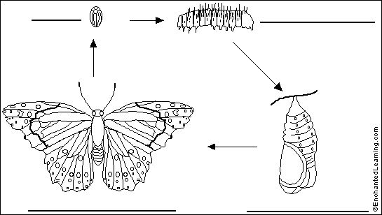 butterfly diagram for kids of butterflies and moths painted lady